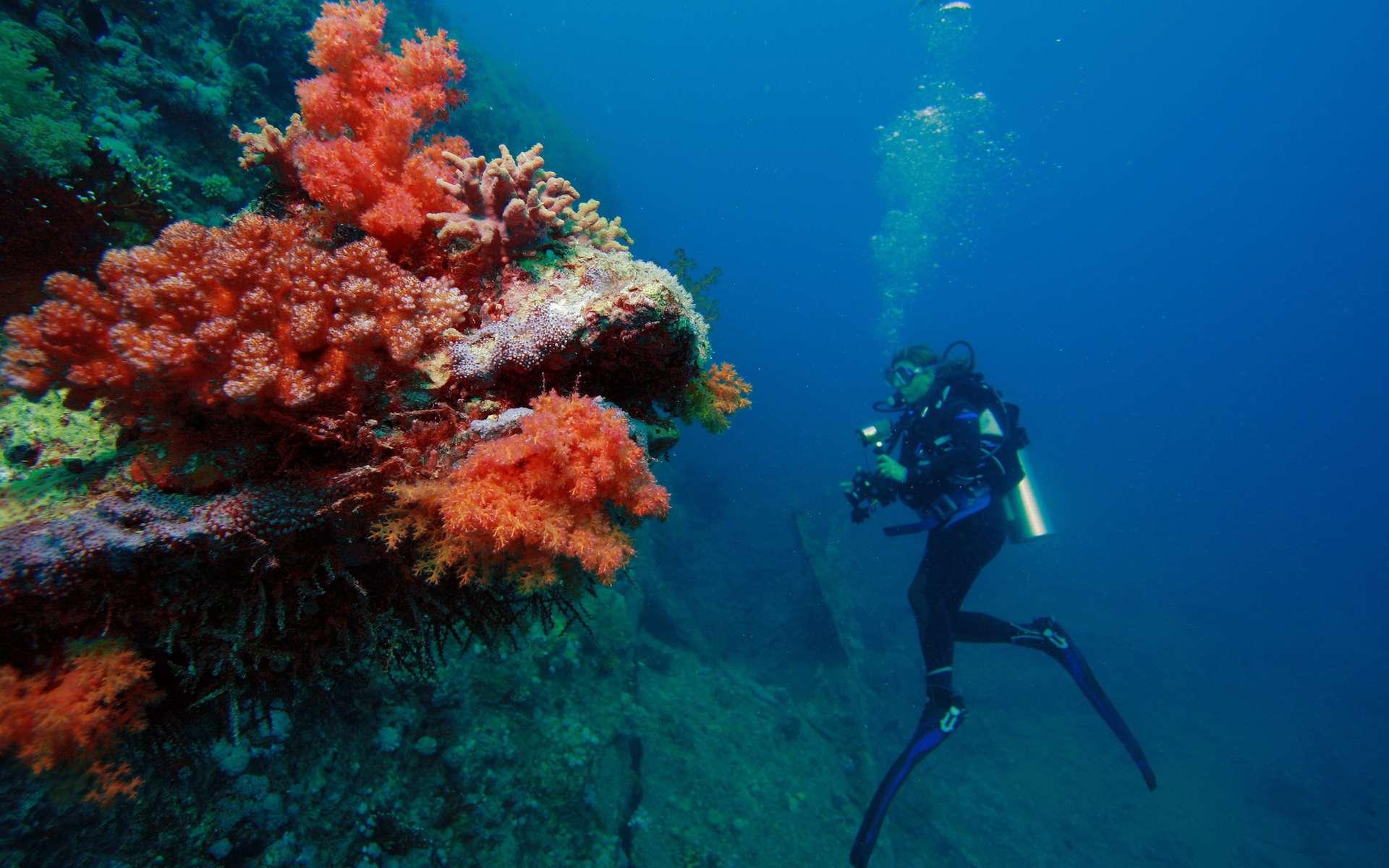 Les avantages de suivre des cours de plongée au sud de France